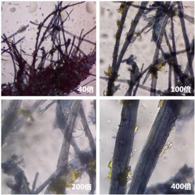 [检测] 纤维类型分析